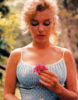 fairymonkey: (Monroe with Flower)