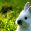 megabyte: (bunny)