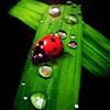 megabyte: (ladybug)