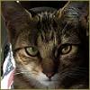4thofeleven: (Darkcat)