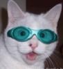 solanine: (goggle cat)
