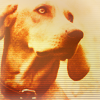 rustydog: (Default)