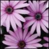 double_mischief: (daisy)