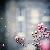 625_sims: (Pink Flower)