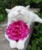 wynkat: (cat - flower)