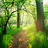 soulforophelia: (summer: woods)