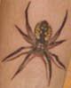 persipone: (Spider!)