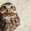 dots: (owl!!)
