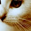arinelle: (white kitty; stare)