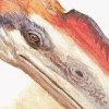pterosaur: (⅋Many people do.)