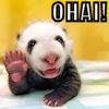 rightangles: (o hai panda)