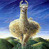 fluffyllama: a fluffyllama drawing on green and blue (llama) (Default)
