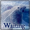 kuangning: (waiting)
