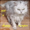 kuangning: (not a happy camper, wet kitty)