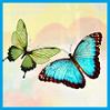 ext_461831: (butterflyz)