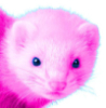 socalrose: Picture of Percy my fictional pink ferret (Default)