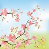 megabyte: (cherry blossom)