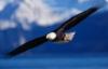 souljoy: (eagle)