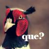 veritas_poet: (Bird - que)