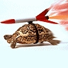taeli: turtle with a rocket strapped to it's shell and fire coming out the back of the rocket ([turtle] rocket)