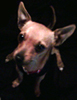 toeknuckles: (my puppy)