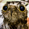 ginasketch: (potoo) (Default)