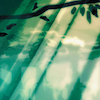omens: sun shining through leaves (SG-1 - sam/teal'c)