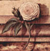 crivelli: (rose)