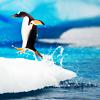 shapinglight: (Bouncy penguin)