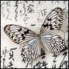 shinsetsu: (Metamorphosis)
