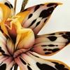 cherrytargaryen: (orchid...??)