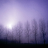 rose_griffes: Moon and trees (moon and trees)