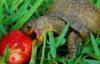 pitry: (turtle)