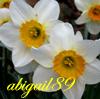 abigail89: (abigail's daffodils)