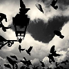 ext_2955: black and white photo of flying birds and a lamp-post (SPN: Reading makes English speaking good)