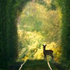 marusarel: spring green woods, with the trees forming an archway, and a deer peering back toward the viewer (Otherworlds: Vanaheim)