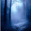 marusarel: a picture of woods at night or during twilight, and full of mist (Forests: Wales)