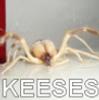 spookyevilone: (keeses)