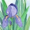 shadowycat: (iris)