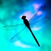 hellkitty: (dragonfly)