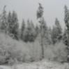 nephir: Snow (Snow)