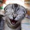 adicta: (Risas de gato)