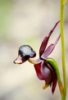 utoch_ka: (orchid)
