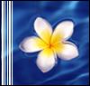 branchandroot: white flower on water (white flower)