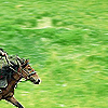 jadelennox: a racing horse on a green field (narnia: racing horse)