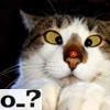 velvet_diamonds: (Confused Cat)