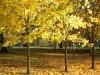 davidcook: (autumn2)