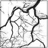 poikilia: (branches) (Default)