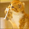 kiezh: A kitten investigating a toothbrush (kitten with toothbrush)