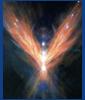branchandroot: wings of fire (fire wings)